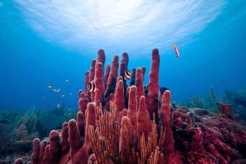 مرجانها و سلامت صخره های مرجانی با میکروب های لزج
