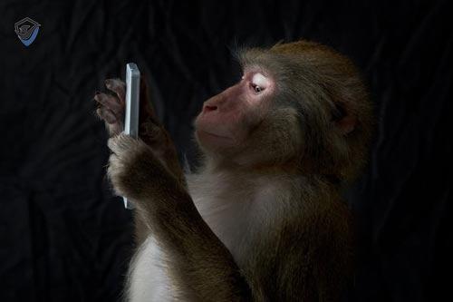 میمون های بالی تلفن همراه گردشگران را در عوض غذا به گروگان می گیرند